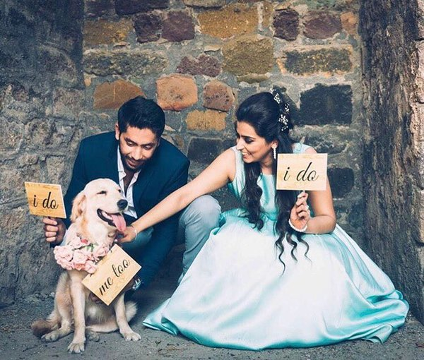 Pets at weddings   the storytellerofficial